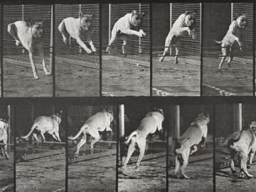 Running Dog, plate of Animal Locomotion