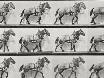 Plow Horse, plate of Animal Locomotion