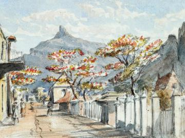 A street Port Louis and flamboyant tree, Mauritius