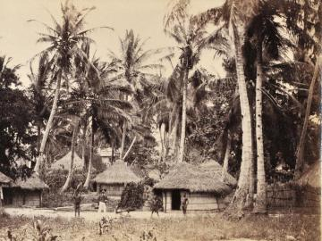 Village in a palm grove