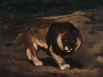 Black-Maned Cape Lion