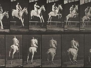 Show jumping, plate of Animal Locomotion